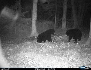 trail cam night pic of two good size bears